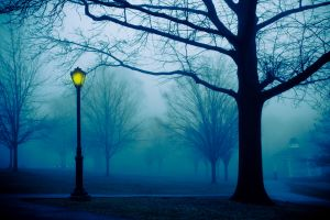 Fog with trees and lamp post