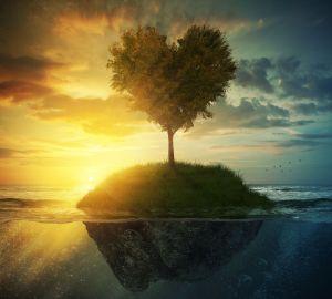 Tree heart in ocean