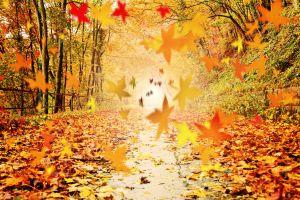 Herbstlicht auf buntem Waldweg  Version 1